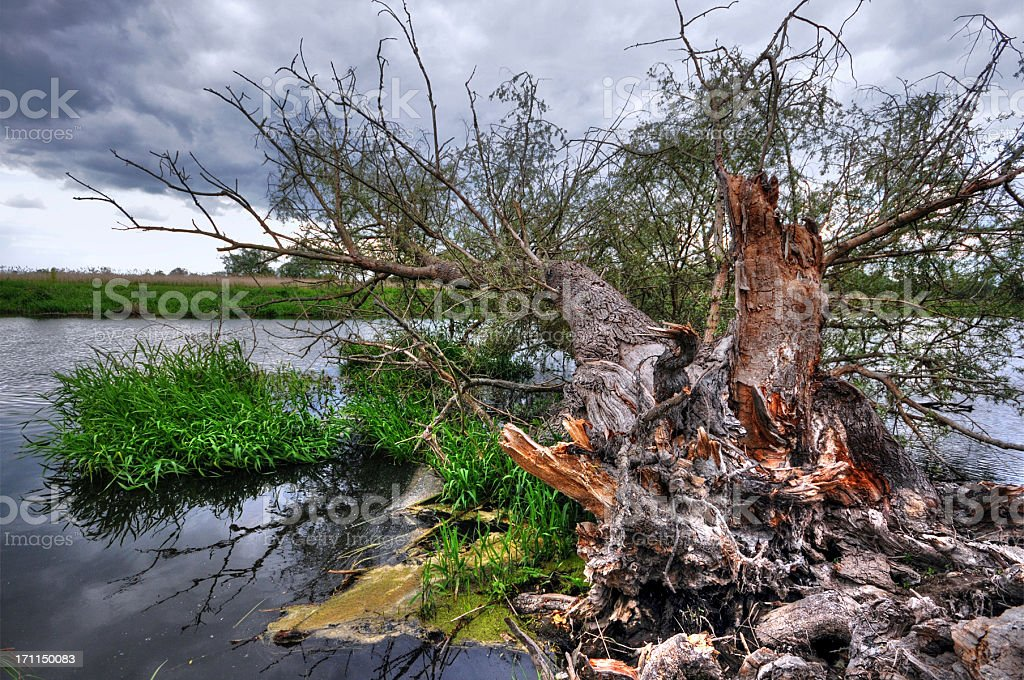 HDR of havel River with typical willow tree broken apart stock photo