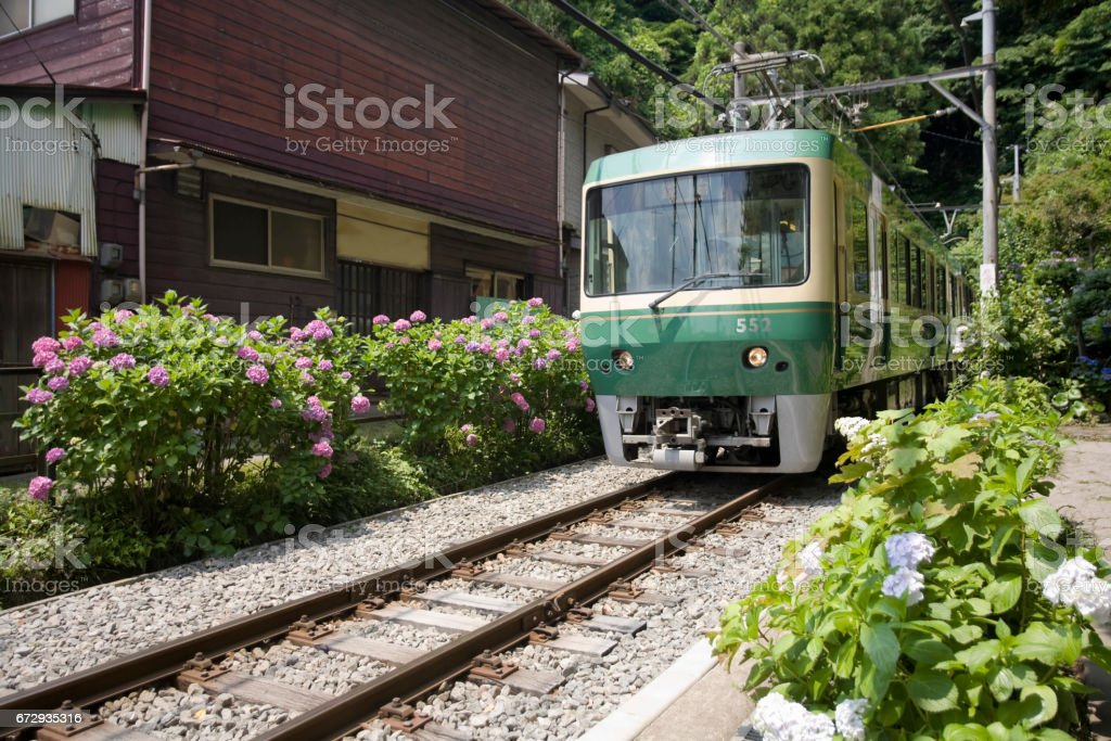 Of the hydrangea with esashi stock photo