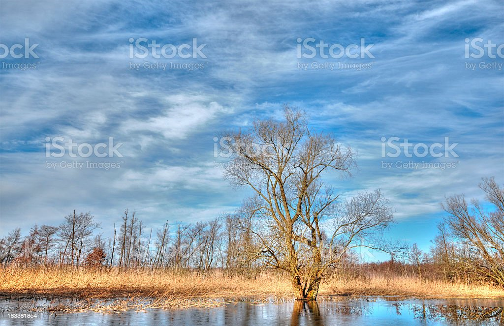 HDR of typical willow tree at havel river during flood stock photo