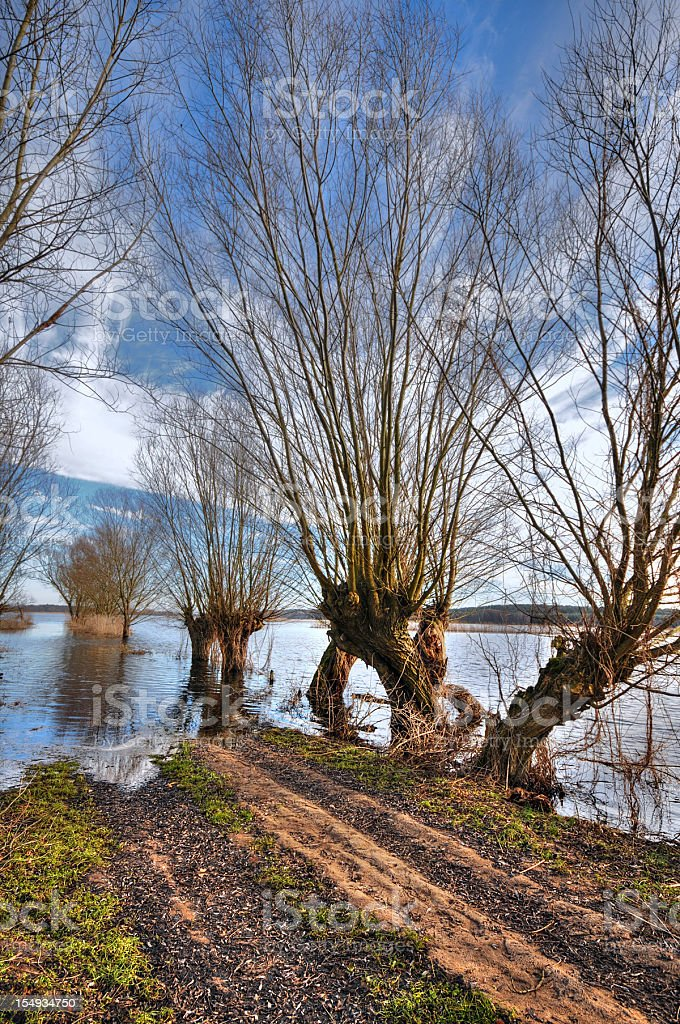 HDR of typical willow tree with path at flood time stock photo