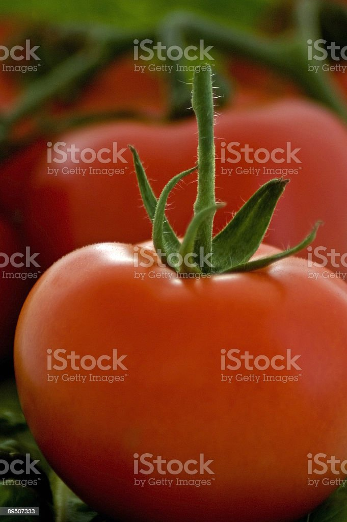 Off the vine royalty-free stock photo