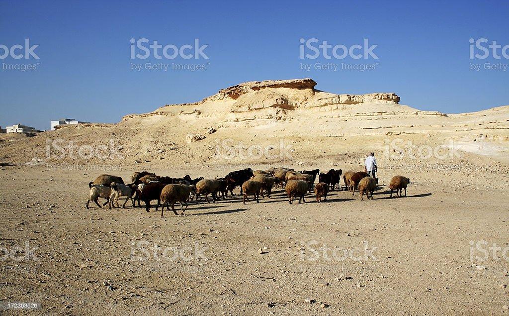 Off to greener Pastures stock photo