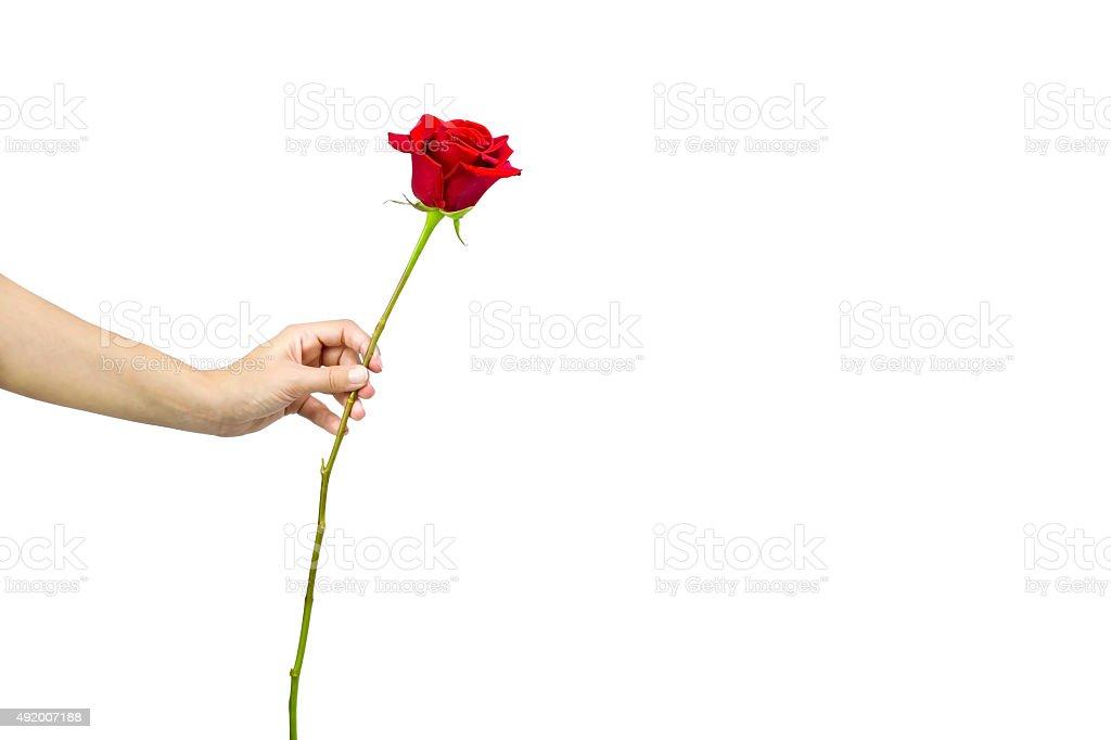 Con rosas rojas - foto de stock