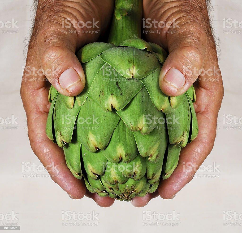 offering an artichoke royalty-free stock photo