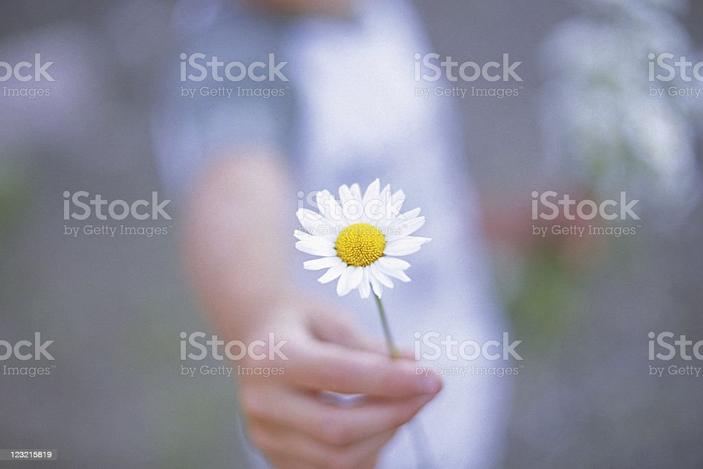 Offering Flower - Sign of Peace stock photo