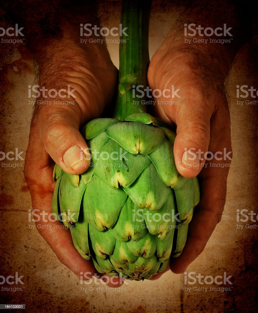 offering the artichoke royalty-free stock photo