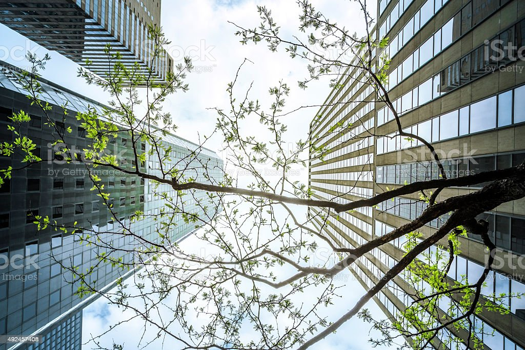 Office Buildings And Trees, Vertical View, New York stock photo