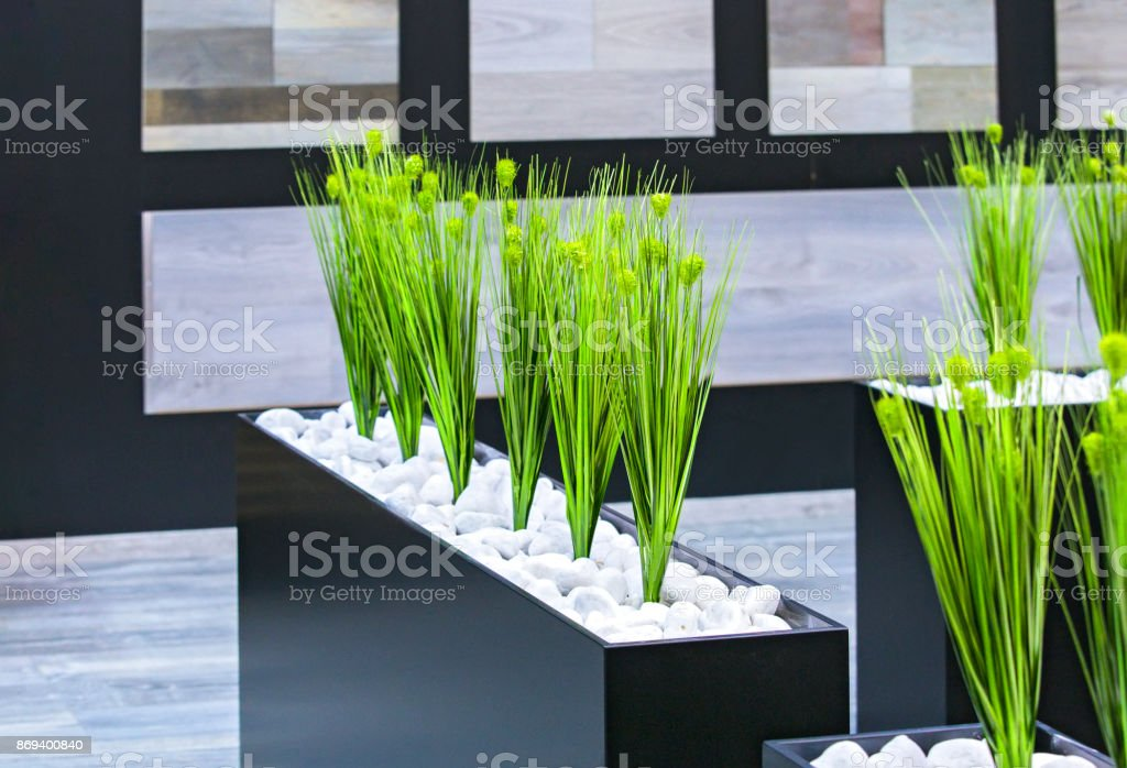 office decor green plants in a black rectangular pot stock photo