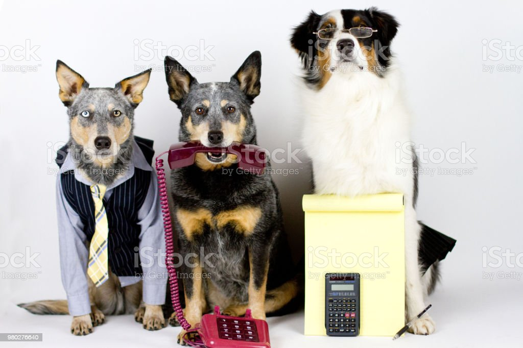 Office Dogs stock photo