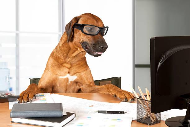 Office manager picture id482350216?b=1&k=6&m=482350216&s=612x612&w=0&h=x0grucbbhsyromq99g1tas z1u1hmacjuhqerc9152k=