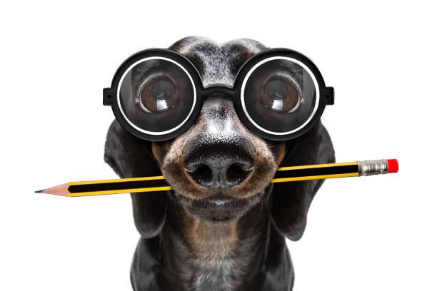 Büromitarbeiter-Chef Hund – Foto