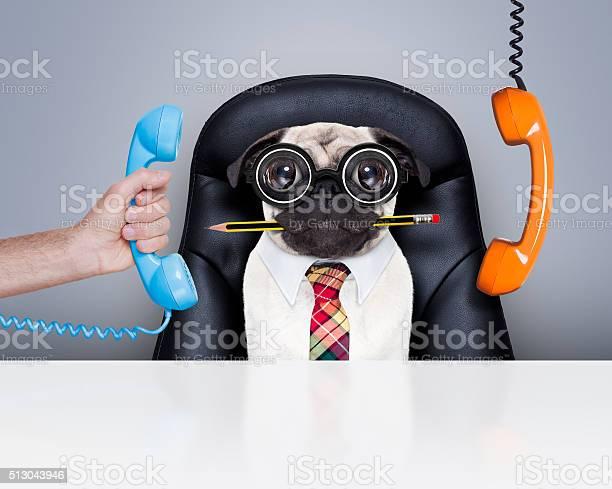 Office worker boss dog picture id513043946?b=1&k=6&m=513043946&s=612x612&h=rlvkfekknwezm7kgaoro57n6kct82bow5ebgyekwxdm=