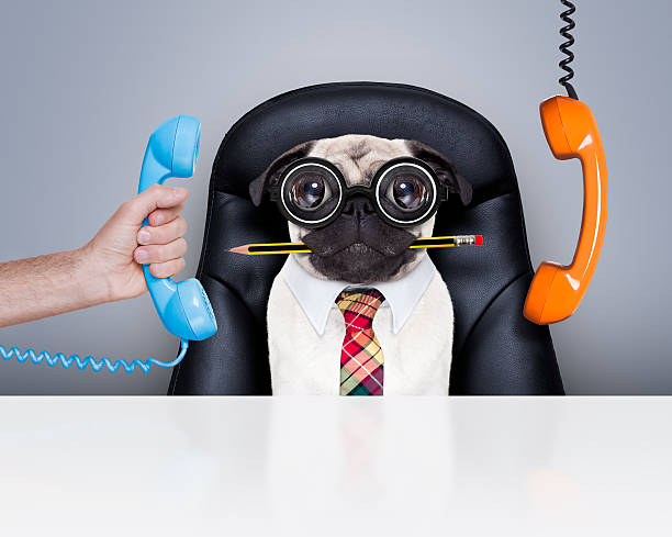 Employé de bureau patron chien - Photo
