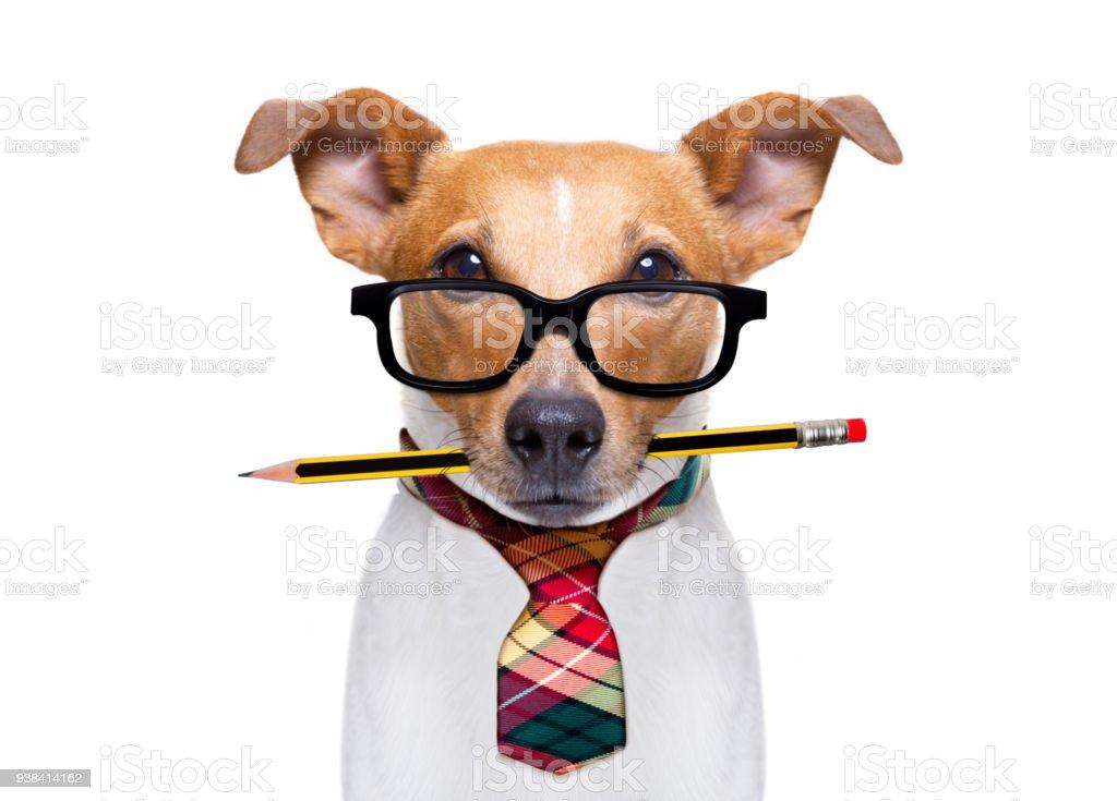 Büroberuf boss Hund – Foto
