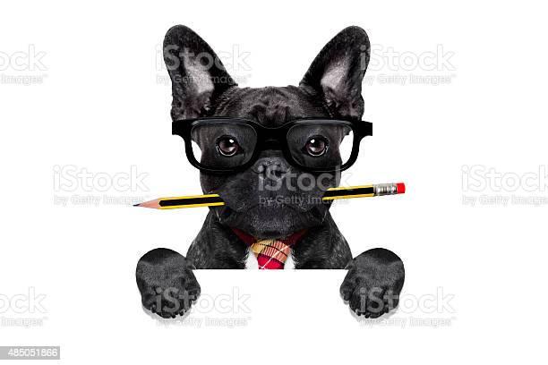 Office worker dog picture id485051866?b=1&k=6&m=485051866&s=612x612&h=jnocknb1 16yyijczgno5 idhf7jpjaarii9zlkjpwk=