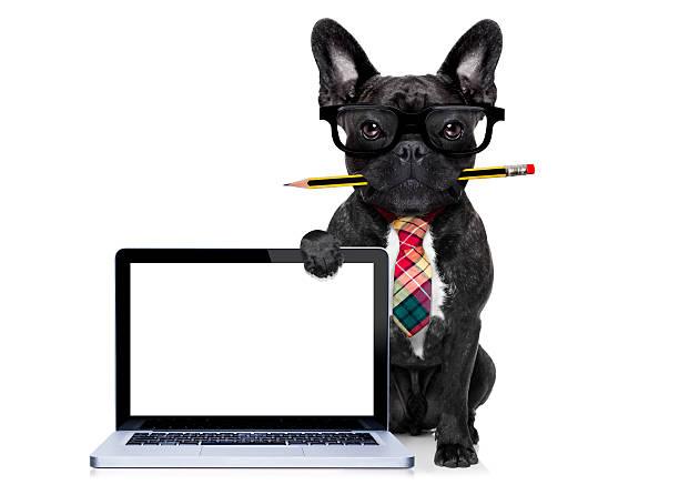 büroberuf hund - geschäftskleidung stock-fotos und bilder