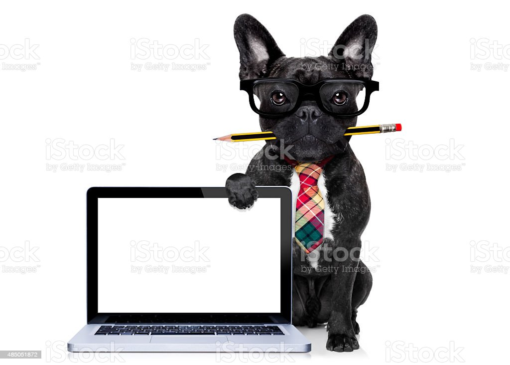 office worker dog stock photo
