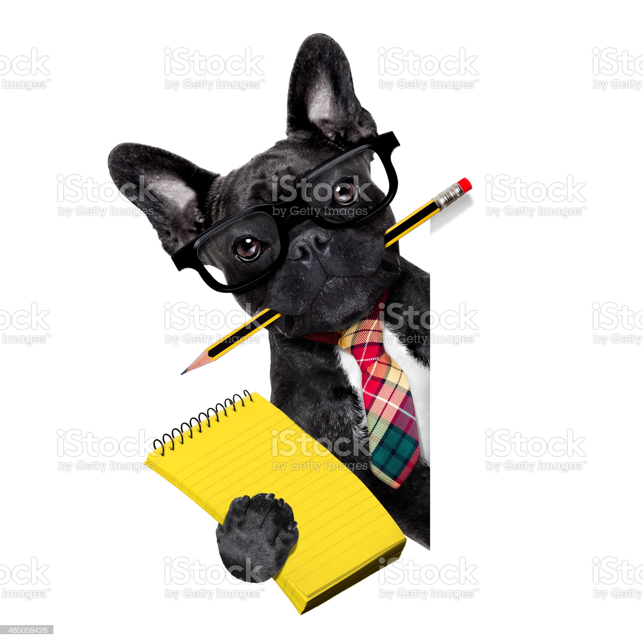 office worker dog royalty-free stock photo