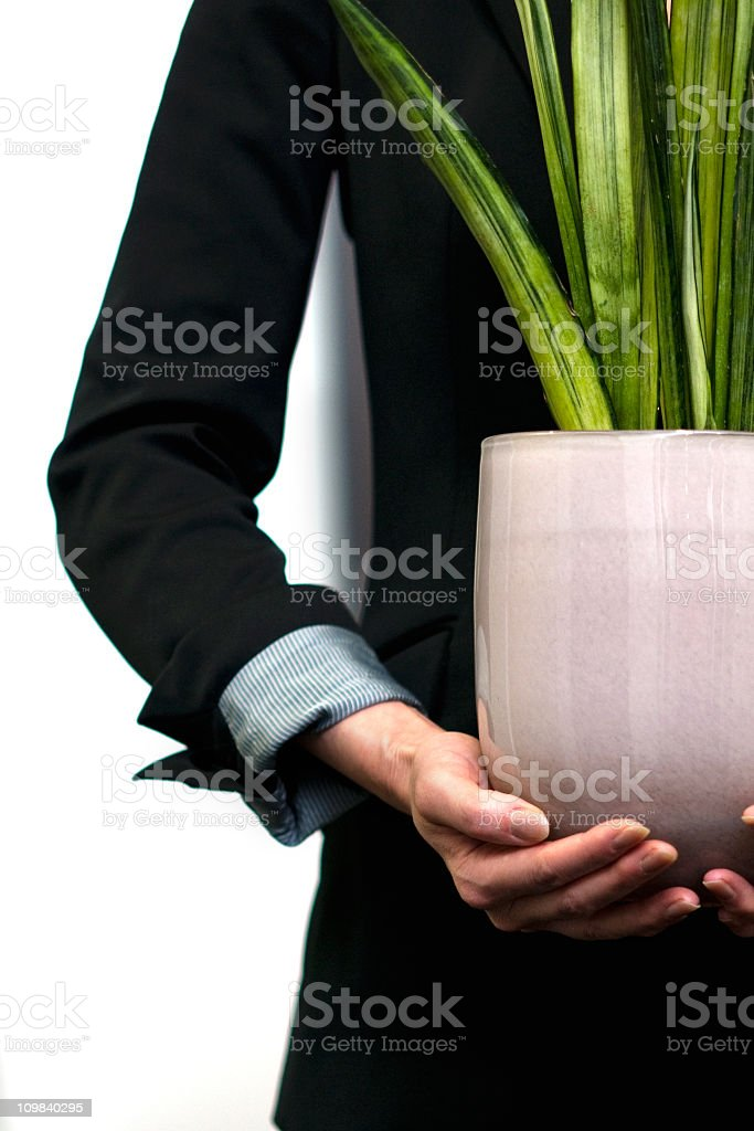 Office worker holding green plant royalty-free stock photo