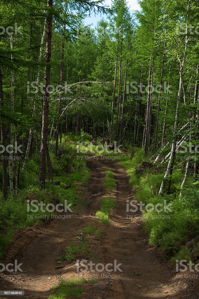 Offroad tracks in a deep wild forest stock photo