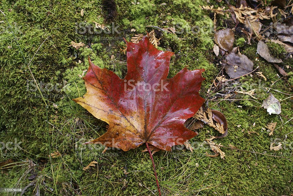 Oh Canada! royalty-free stock photo