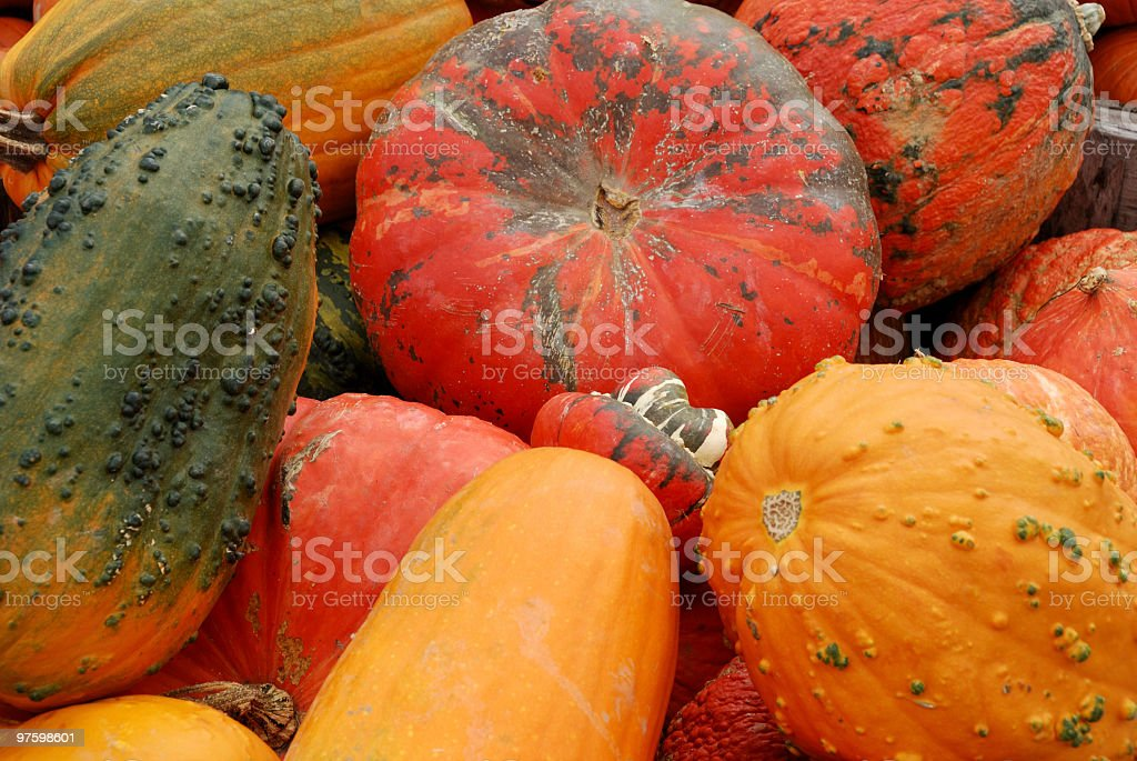 Oh My Gourd! royalty-free stock photo