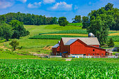 Spring corn crop fills the foreground leading back to a red barn and rolling hill background with clouds above, Ohio