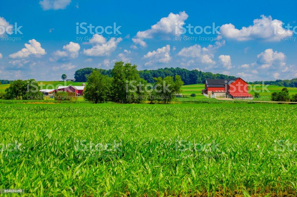 Ohio Bauernhof mit Frühling Mais (P) – Foto