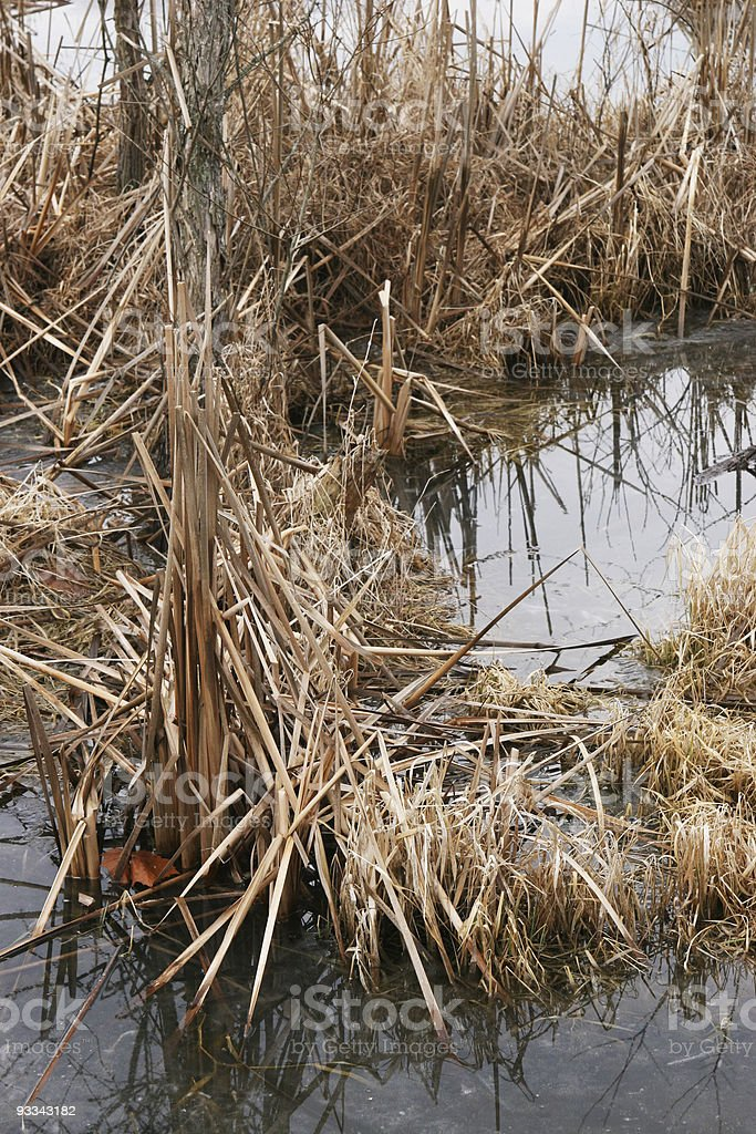 Ohio Water Plants in Winter royalty-free stock photo
