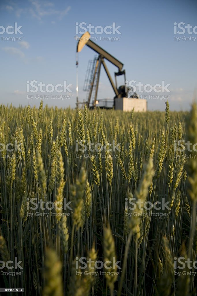 Oil Derrick in a Wheat Field royalty-free stock photo