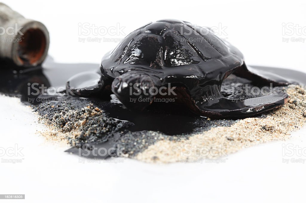Oil disaster royalty-free stock photo