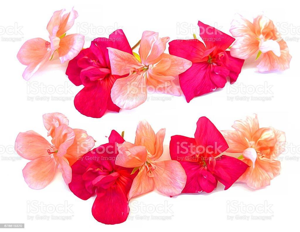 Foto De Oleo De Desenhar A Perspectiva De Geranio Pintar Flores