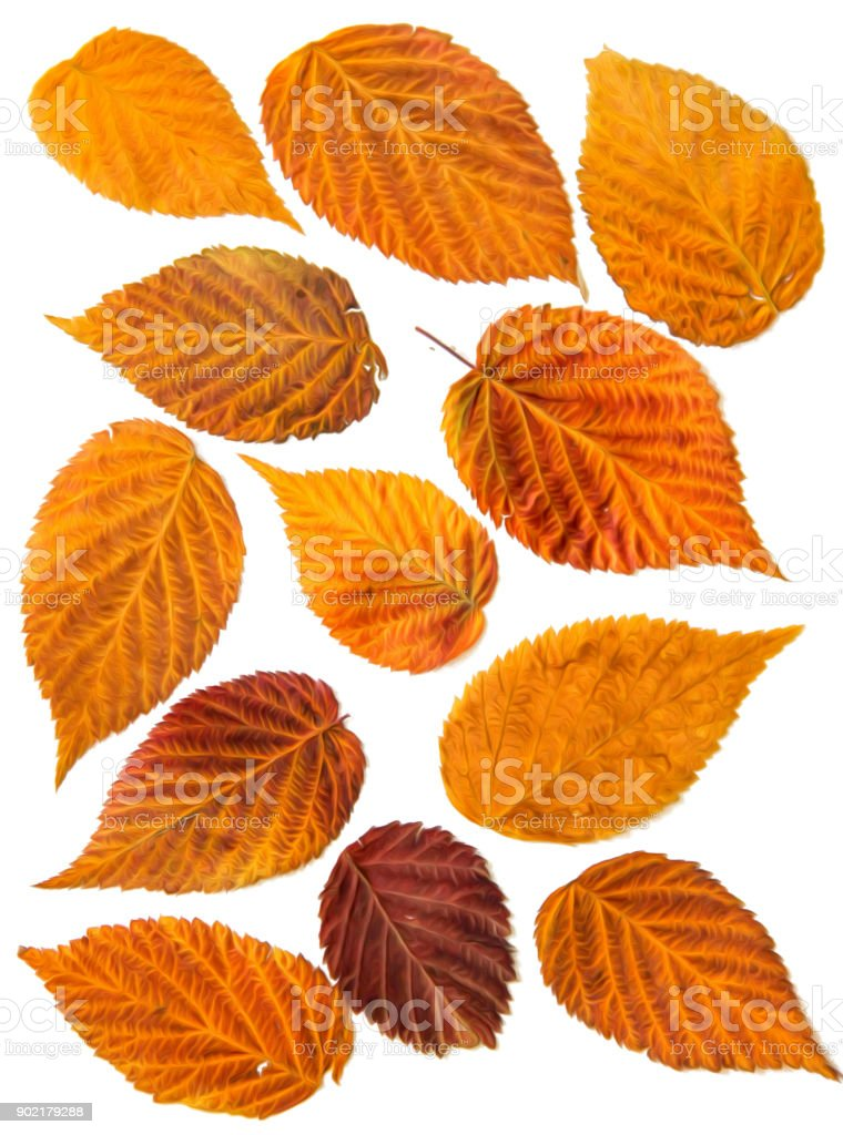 Oil draw illustration of set dry pressed scattered raspberries leaves, isolated with shadow. Photo manipulation stock photo