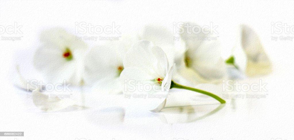 huile de dessiner perspective géranium blanc, photo libre de droits
