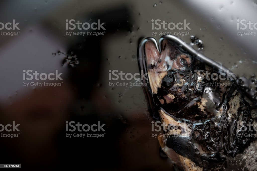 Oil Eco-Disaster Fish royalty-free stock photo