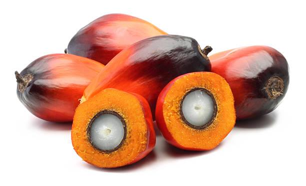 frutos de palma - oleo palma imagens e fotografias de stock