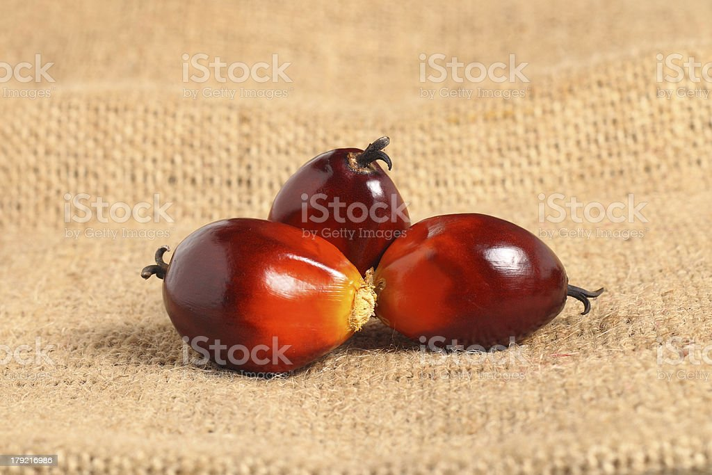 Oil palm fruit royalty-free stock photo