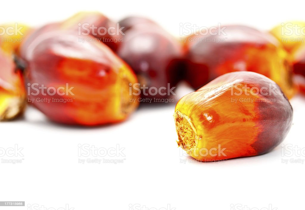 oil palm fruits royalty-free stock photo