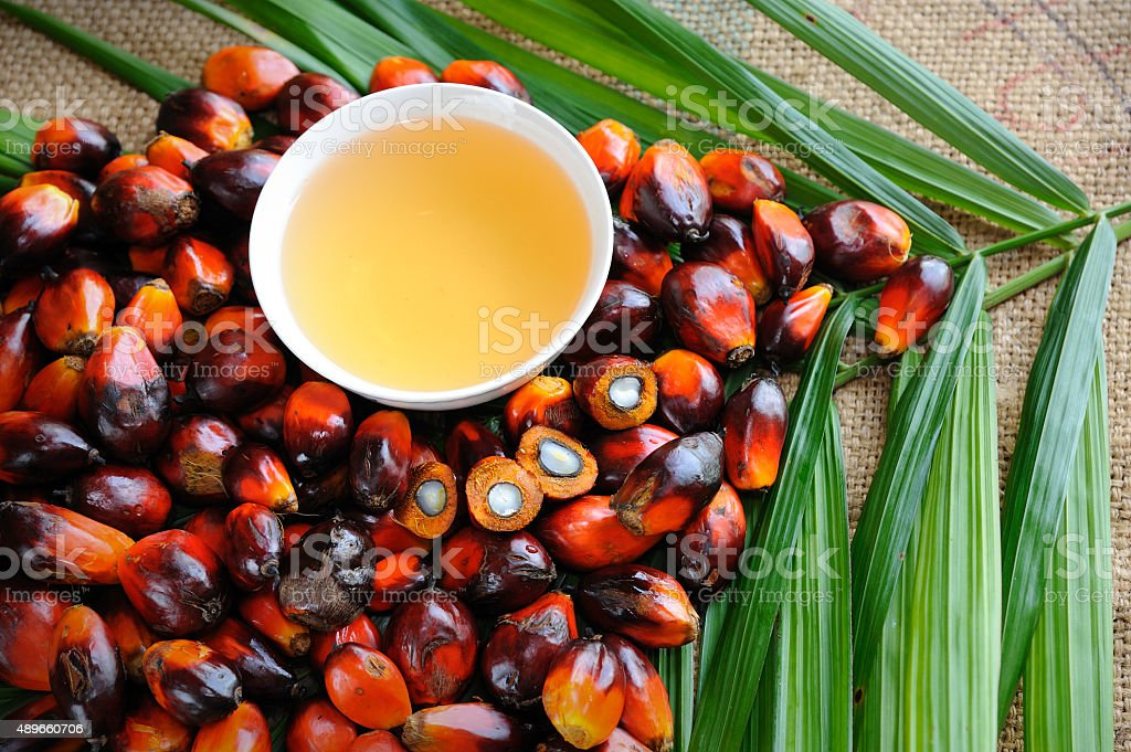 Oil palm fruits with cooking oil stock photo