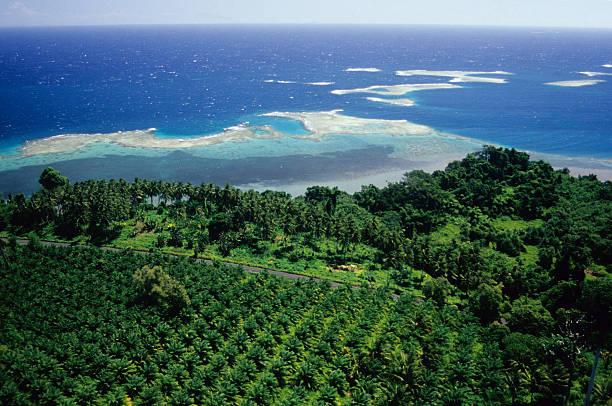 Oil Palm Plantation, WNBP Oil Palm (palm oil) plantation by the sea, papua New Guinea. palm oil stock pictures, royalty-free photos & images