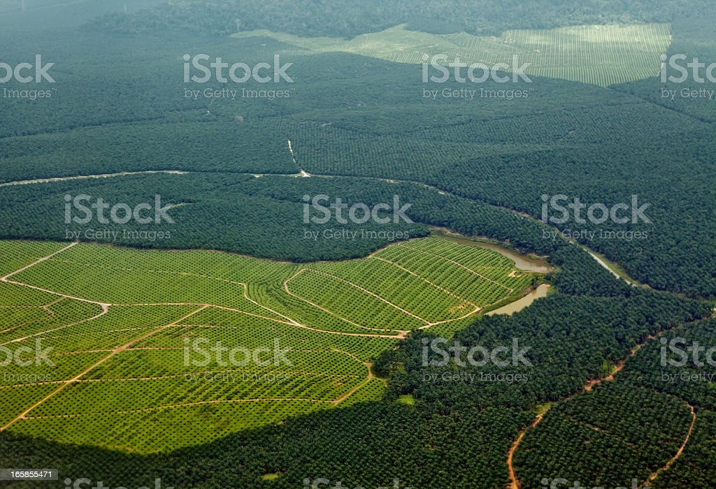 Oil Palm Plantations Oil palm plantations in northeastern Borneo, state of Sabah, Malaysia. Recently planted oil palms can be seen in the bright green grassy areas and a tiny bit of natural rainforest still struggles for survival farther away. Aerial View Stock Photo