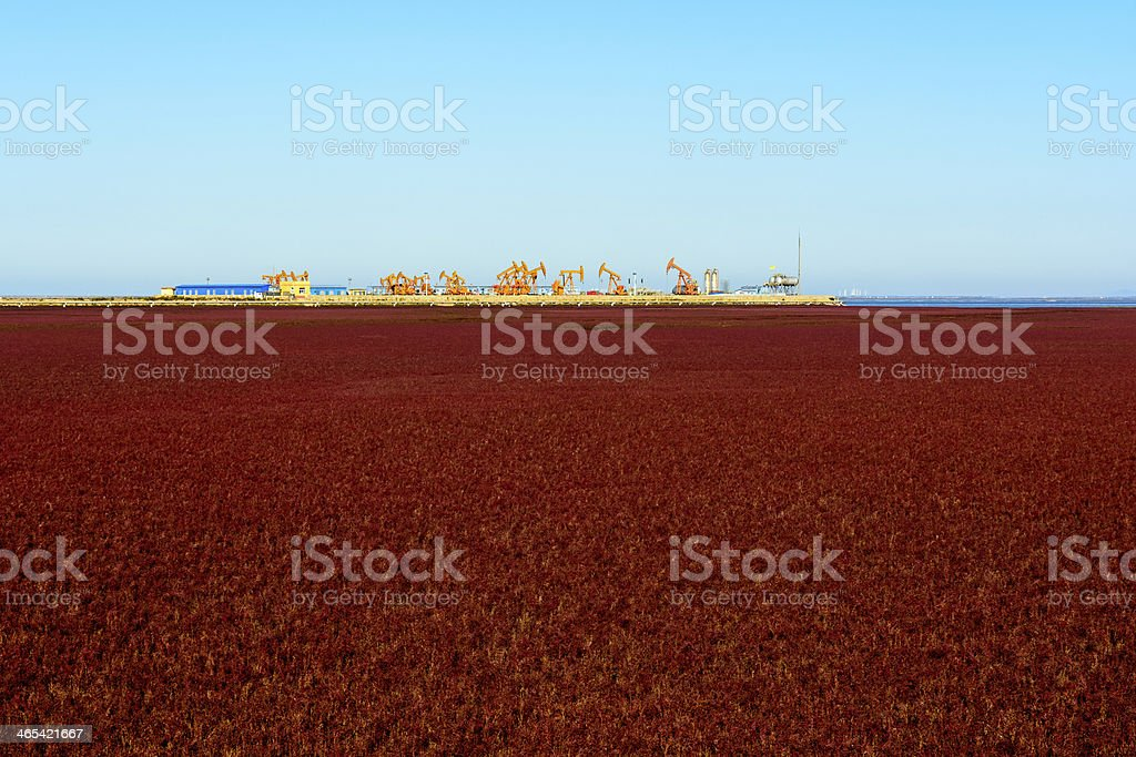 Oil pump and rig energy industrial machine in suaeda grass stock photo