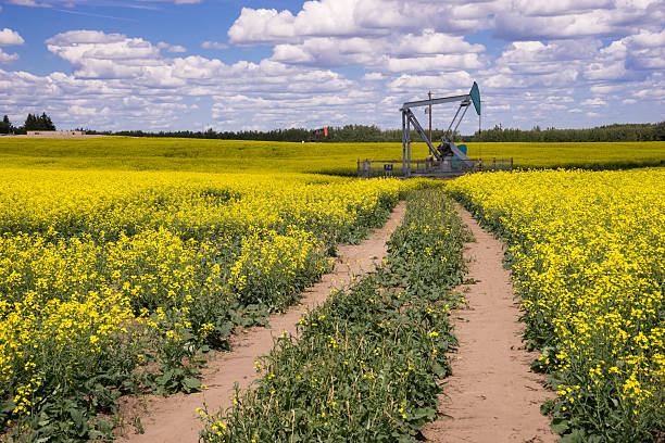 Oil Pump jack in the middle of blooming canola field stock photo