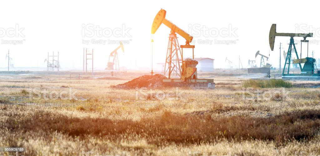 Oil pumps in the reed field stock photo