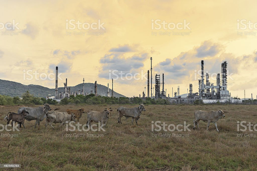 Oil refinery beautiful at twilight sky stock photo