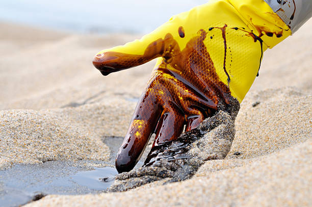 Oil Spill: Beach Clean-up stock photo