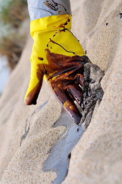 oil spill: endless summer of clean-up - mike cherim stock pictures, royalty-free photos & images