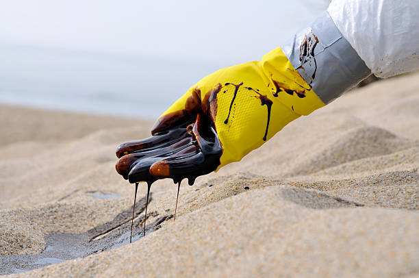oil spill: tragic - mike cherim stock pictures, royalty-free photos & images