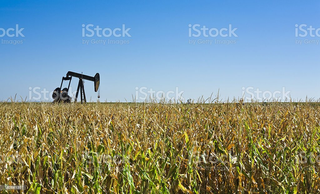 oil well pumpjack in corn field, renewable and non-renewable energy royalty-free stock photo