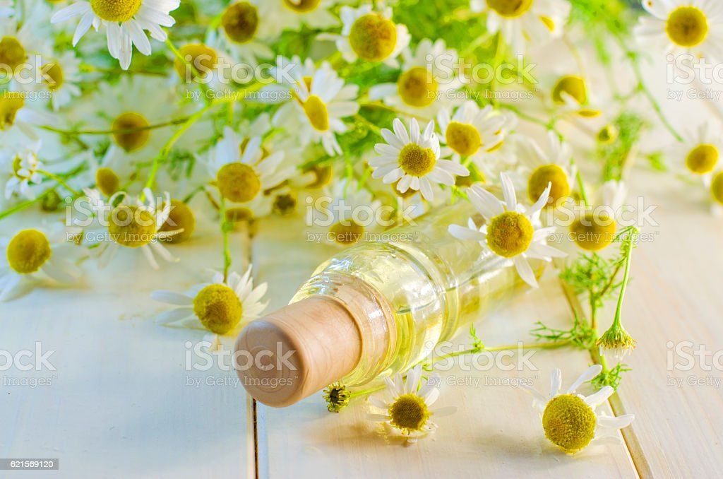 oil with chamomile extract photo libre de droits